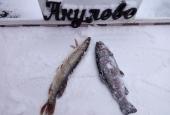 Зимняя рыбалка 2018_2