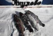 Зимняя рыбалка 2018_4