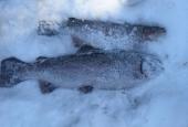 Зимняяя рыбалка_24